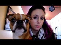 Joke Tuesday with Little Johnny Know It All, Brittany, French Bulldog, Tuesday, About Me Blog, Jokes, Youtube, Animals, Animais