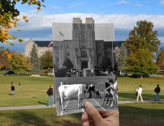 The original section of Burruss Hall was completed in 1936. What an awesome picture with the cow in front of burress!!!!!