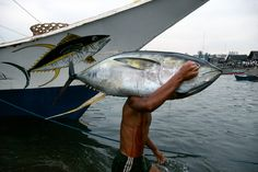 Bruno Barbey View profile PHILIPPINES. S.Mindanao. General Santos City harbour. Unloading tuna fish. 1995.