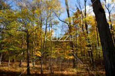forest with autumn trees. - View of a forest with autumn trees.