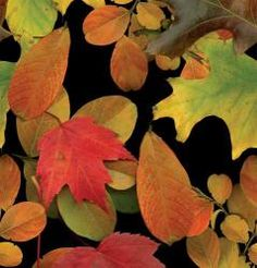 'Vibrant Leaves' Plastic Table Cover