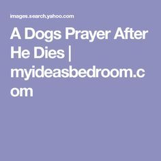 A Dogs Prayer After He Dies | myideasbedroom.com