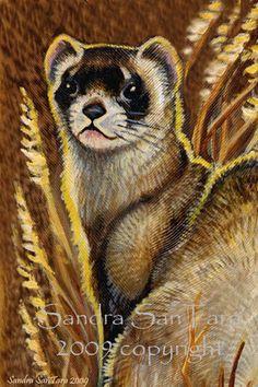 DeviantArt: More Like Ferret with Toy by Joceweir