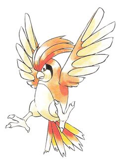 #pidgeotto #pokemon #anime #pocketmonsters
