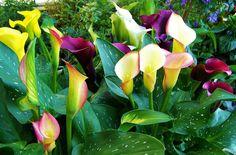 siembra de cartuchos flores - Buscar con Google