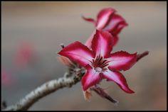 deze bloem is woest en mooi