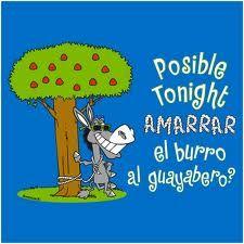 #TuFraseCanaria Amarrar el burro al guayabero