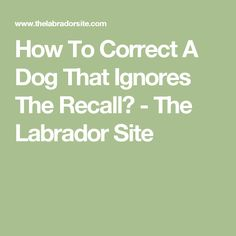 How To Correct A Dog That Ignores The Recall? - The Labrador Site