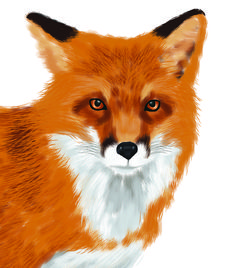 A vibrant, modern touch to any home decor with this realistic digitally painted orange fox. Perfect for a collage or as a standalone piece.