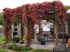 Si cuentas en tu jardín con una pérgola, un cenador o cualquier otra estructura similar no puedes dejar pasar la ocasión de plantar una trepadora que la aproveche como soporte. Tendrás además de un…