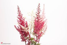 From Flower Muse Blog - WTF? (What's That Flower?): Astilbe