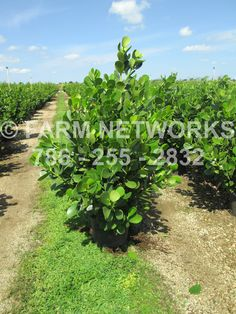 Farm Networks Llc Farmnetworksllc On Pinterest