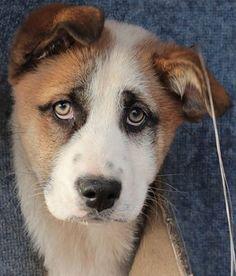 #animali #adorable_animals #bullie #babyanimals #igcutest_animals #my_loving_pet #pets_perfection #meowvswoof #my_pet_feature #pets_of_our_world #bulldoglife #cuteanimals #animallover #cuteanimal #cute #dogs_of_instagram #ilovemydog #doglife #doglover #instadog #petsofig #animalsmood #animalkingdom #animal_captures #animalsofig #animallove #loro #catnap #cutecats #fluffycat