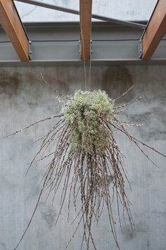 Hanging babys breath and pussy willow flower chandelier from Lola Event Floral & Design