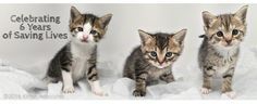 #CharityTuesday: this month we are supporting #KittenAssociates, they are the new Breed of Cat #Rescue. Not only do they help kittens and #cats from high risk situations, such as death row at Kill Shelters, but they also provide Web Based Communication Tools for small, struggling Rescue Groups & Animal Shelters. For more information about this great #charity, visit their Facebook page or website: http://www.kittenassociates.org/ #ModifiedDolls #NonProfit #SuportingCharities #RaisingAwareness