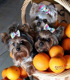 Basket full of cute!