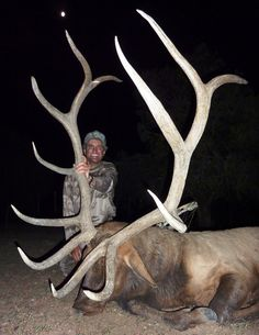 Not into trophy hunting but this elk is huge.