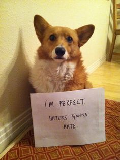 Corgis are perfect.