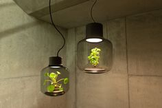 We Love Eames is the German designer who created these beautiful lamps for growing your plants indoor, project name Mygdal Plantlamp. These innovative lamps combine a sleek casing glass and daylight LEDs. A nice way to highlight your plants! Lamp Design, Lamp, Light, Glass, Led Lights, Light Fixtures, Lights, Mason Jar Lamp, Plant Lighting