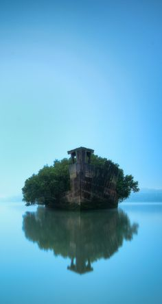 Floating Forest - Homebush Shipwreck, Australia