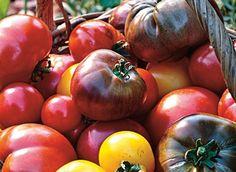 www.rustica.fr - Programmer les semis des légumes du printemps et de l'été