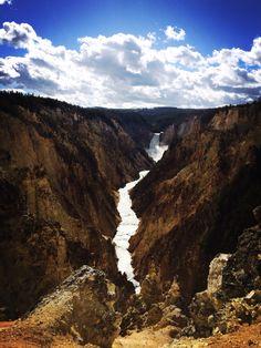 Lower falls@Yellowstone