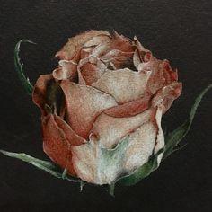 Роза/Rose Иллюстрации цветными карандашами на черной бумаге Colored pencil illustrations on black paper