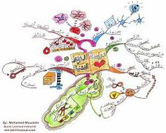 An example of a mind map. Here you can see how to structure a mind map.