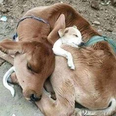 Things that make you go AWW! Like puppies, bunnies, babies, and so on. A place for really cute pictures and videos! Cute Funny Animals, Cute Baby Animals, Animals And Pets, Cute Dogs, Beautiful Creatures, Animals Beautiful, Beautiful Things, Unusual Animals, Unusual Animal Friendships
