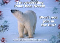 Love for the Polar Bear Pictures Of Polar Bears, Apex Predator, Arctic, Mammals, Habitats, Wildlife, Fun, November, Canada