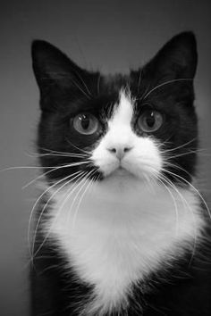 Cats may be animals, but so many centuries of serving as domesticated pets has spoiled them. Cats today have become much more sensitive to the wild than the Pretty Cats, Beautiful Cats, Animals Beautiful, Cute Animals, I Love Cats, Crazy Cats, Cool Cats, Elfen Tattoo, Kittens Cutest