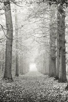 Forest art  Woodland photography  Tree art  Tree by JKphotography, €21.00  I love it, but I think I need color.