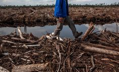 Industry leaders such as PepsiCo, Walmart and Starbucks banded together Monday to call for stricter certification standards for sustainable palm oil production