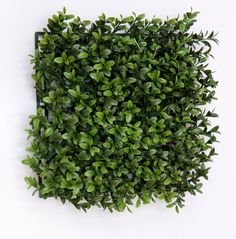 These artificial boxwood hedge panels are one of our most popular products, they are an extremely versatile topiary and can be made into any shape Artificial Boxwood, Artificial Plants, Box Hedging, Boxwood Hedge, Architectural Elements, Topiary, Hedges, Trees To Plant, How To Dry Basil