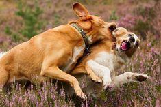 Schockmoment: Was tun, wenn mein Hund angegriffen wird? ⋆ Hunde