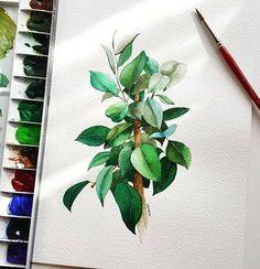 이런 색은 왜 만들었을까 싶었던 색들 골고루 써봤더니 이유를 알게됨 Fabriano Atistico Rough 300g Daniel Smith, SWC . . . 모든 그림은 개인적.상업적 이용불가 ※저작권 도용.변형 copy※ . . . #5살 #고마운 #고무나무 #watercolours #trees #수채화 #손그림 #illustrations #botany #artpaintings