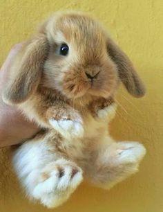 70 Trendy Pet Bunny Names Baby Cute Baby Bunnies, Baby Animals Super Cute, Cute Little Animals, Cute Funny Animals, Cute Babies, Fluffy Animals, Animals And Pets, Pet Bunny Rabbits, Dwarf Bunnies
