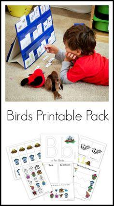 essay on birds for kids