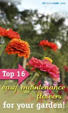 Gardening & Outdoors: Top 16 Easy-Maintenance Flowers for Your Garden!