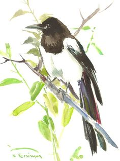 Bird Art Magpie Original watercolor 12 X 9 in by ORIGINALONLY
