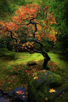 Falling Tree by Sunny Sra on 500px, Japan
