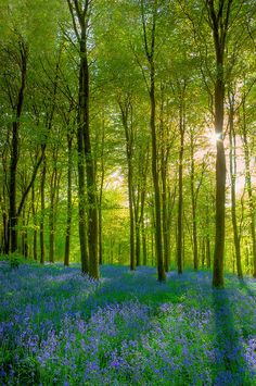 ✮ Ermington Woods in the South Hams of Devon, UK