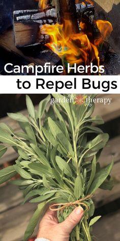 Diy Mosquito Repellent, Mosquito Spray, Natural Mosquito Repellant, Mosquito Repelling Plants, Insect Repellent, Plants That Repel Bugs, Garden Bugs, Herb Garden, Medicinal Plants