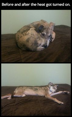 """Before and after the heats turned on."" ~ Dog Shaming shame - Dog Thermometer - Change in temperature…"