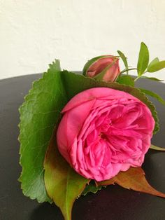Rose Pink Piano Sources: LES FEES NATURE: septembre 2013