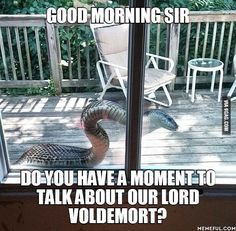 Image result for excuse me do you have a minute to talk about our lord voldemort