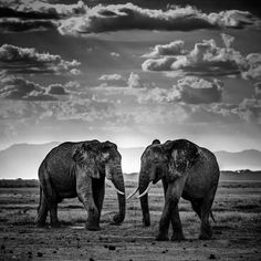 Captivating Wildlife Portraits Celebrate the Soul and Individuality of Africa& Animals - My Modern Met Africa Art, West Africa, Wildlife Photography, Animal Photography, Photo Portrait, Tier Fotos, Black And White Photography, Animal Drawings, Beautiful Creatures