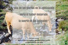 #AnimalLovers #animales #animal #cows #quote #pyrenees #pirineo #pirineu #valdaran #aran