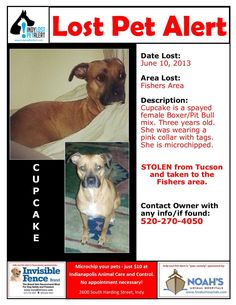 #FISHERS #IN #INDIANAPOLIS #LOSTDOG 6-10-13 Stolen from Tucson  #BOXER #PITBULL MIX 3 YEARS OLD  PINK COLLAR WITH TAGS  MICROCHIPPED 520-270-4050