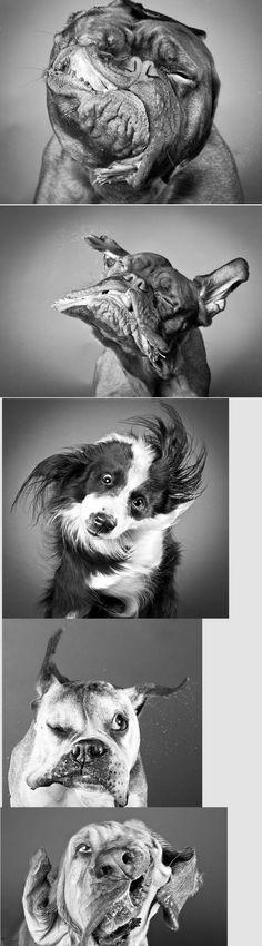 "via Scott Stratten carli davidson photography.  I'm chocking this one up to ""dog's I'd like have"""